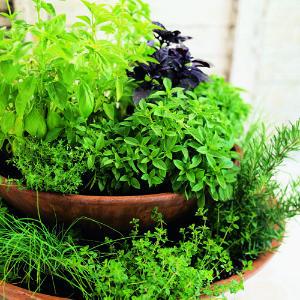 Design a Container Garden For Herbs